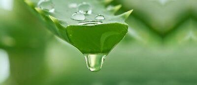 Aloe Vera gel benefits in marathi