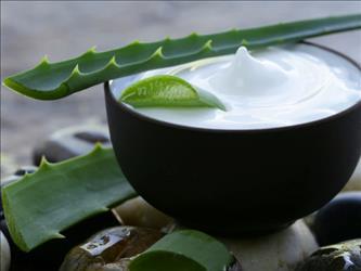 Aloe Vera, Yogurt and Olive Oil for hairs in marathi