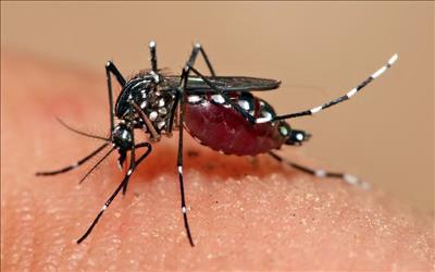 Health Tips For Monsoon In Marathi